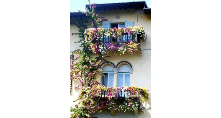 balcony-flowers