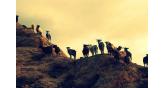 Samothraki-goats