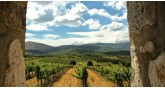 winery-estate