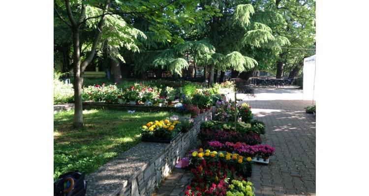 Edessa-flowers