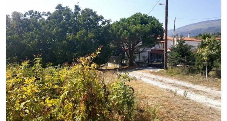 Panagitsa-plot for sale