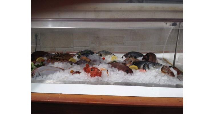 oceanides-fish