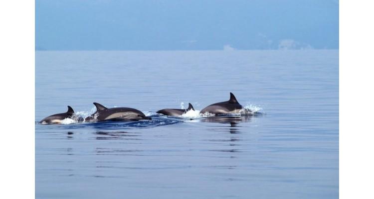 Thessaloniki-dolphins