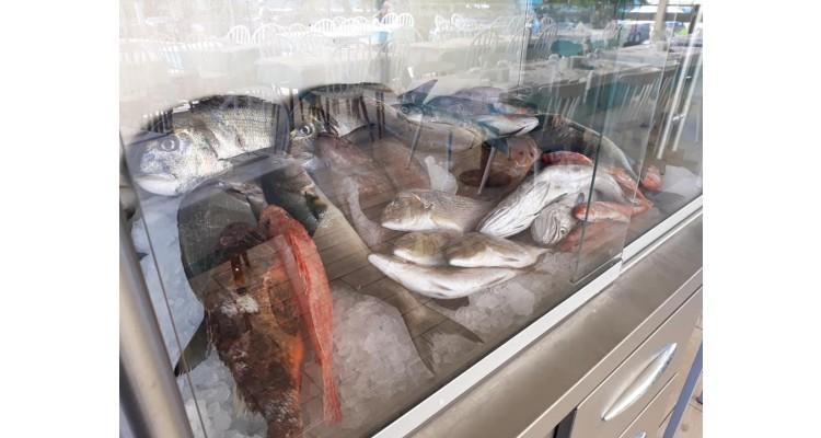 φρέσκα ψάρια