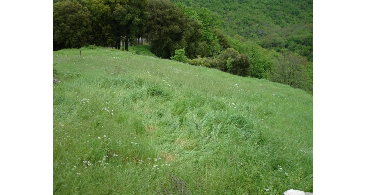 plot for sale in Zagori