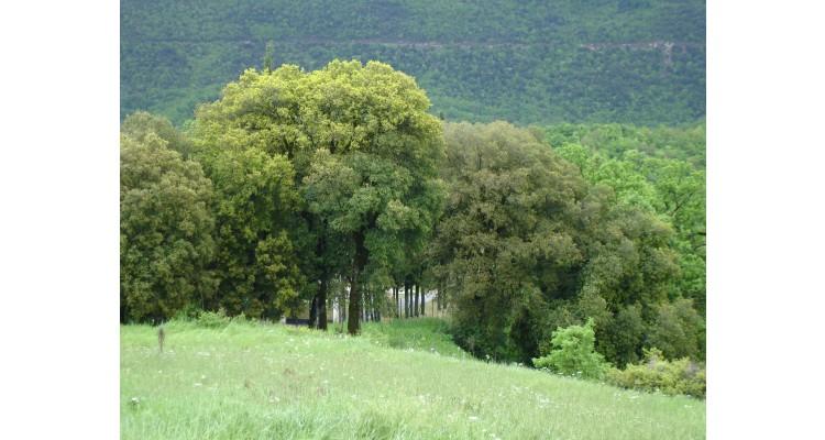 plot for sale in Zagori