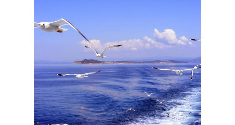 Ammouliani-birds