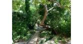 Έδεσσα-δάσος
